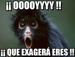 memes de monos13