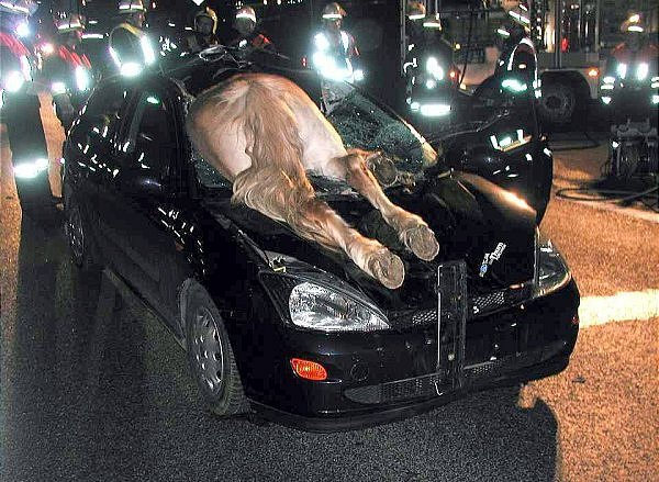 imagenesdeaccidentesgraciosos19 30 Imagenes de accidentes chistosos para Whatsapp