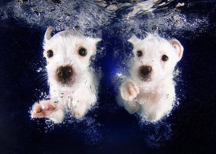 imagenesdeperrosgraciosos14 Imagenes Graciosas de Perros para Whatsapp