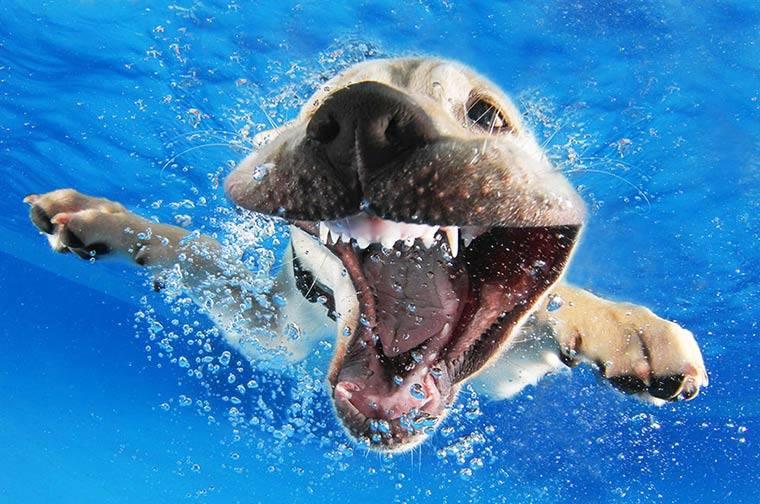 imagenesdeperrosgraciosos4 Imagenes Graciosas de Perros para Whatsapp