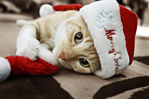 feliznavidadimagenes12 Imagenes y Tarjetas de Feliz Navidad 2016