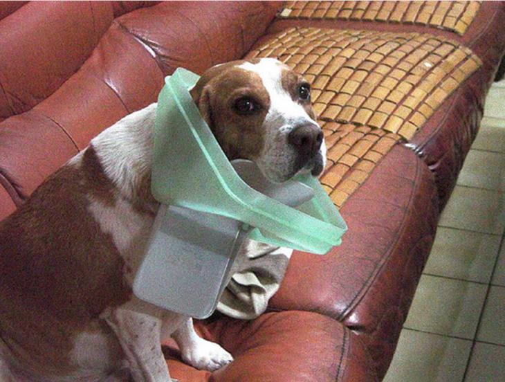 imagenesdemascotasgraciosas16 30 Imágenes Graciosas de Mascotas Haciendo cosas indebidas en Casa