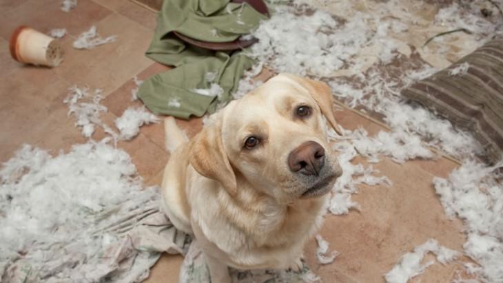 imagenesdemascotasgraciosas23 30 Imágenes Graciosas de Mascotas Haciendo cosas indebidas en Casa