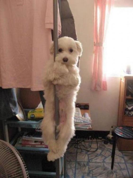 imagenesdemascotasgraciosas24 30 Imágenes Graciosas de Mascotas Haciendo cosas indebidas en Casa