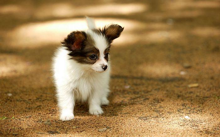 imagenes de perritos2 Imágenes de Perritos