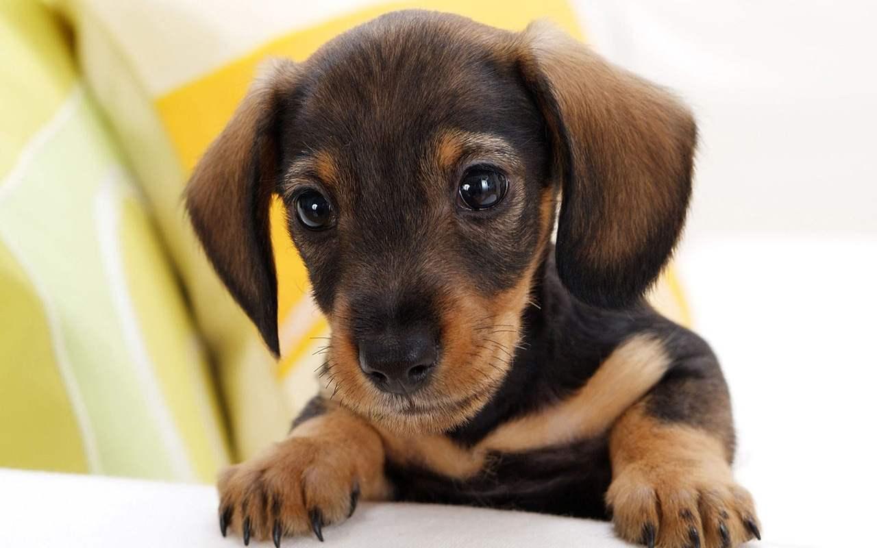 imagenes de perritos20 Imágenes de Perritos