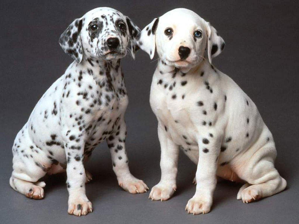 imagenes de perritos25 Imágenes de Perritos