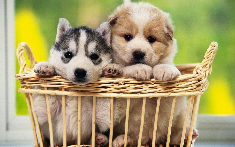 imagenes de perritos32 Imágenes de Perritos