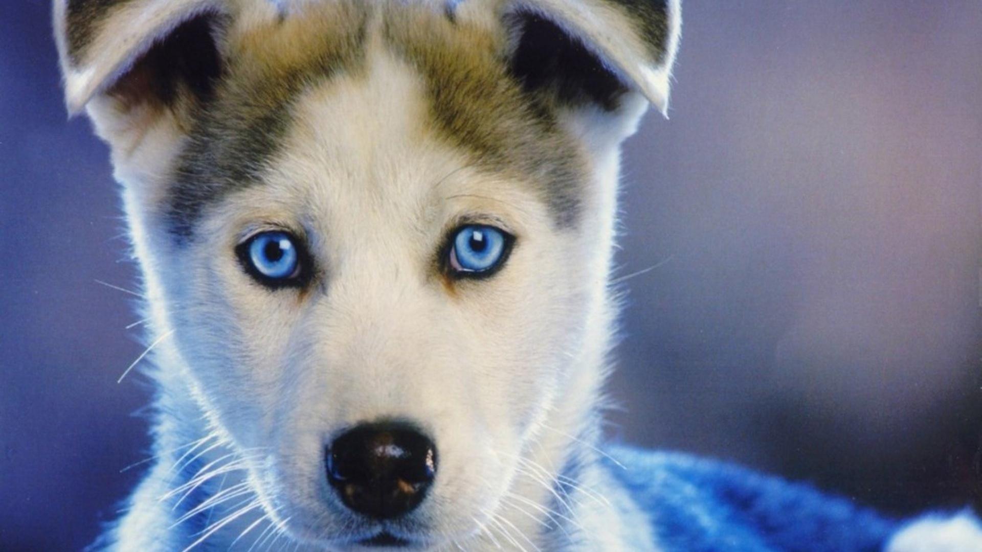 imagenes de perritos9 Imágenes de Perritos