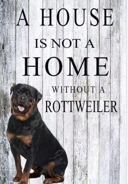 imagenes de perros rottweiler20 Imágenes de Perros Rottweiler