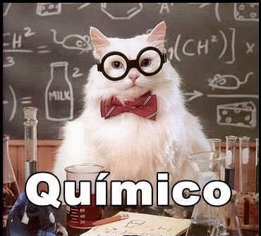 imagenes graciosas de gatos con oficios10 Imágenes Graciosas para Whatsapp (Gatos y Frases)