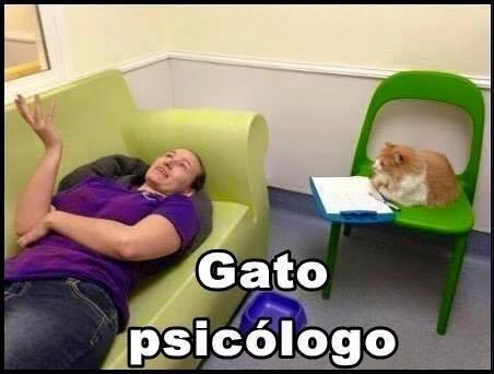 imagenes graciosas de gatos con oficios11 Imágenes Graciosas para Whatsapp (Gatos y Frases)