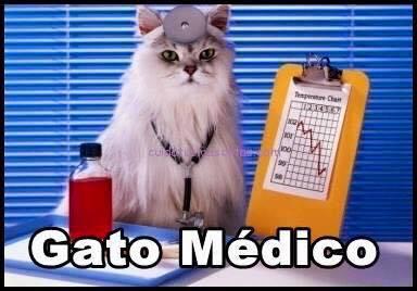 imagenes graciosas de gatos con oficios12 Imágenes Graciosas para Whatsapp (Gatos y Frases)