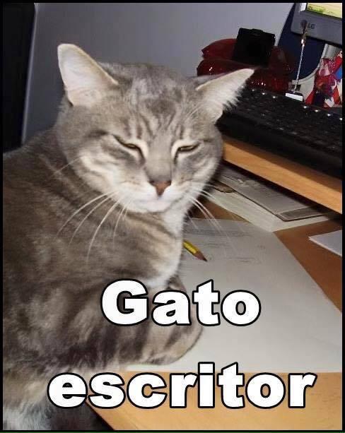 imagenes graciosas de gatos con oficios13 Imágenes Graciosas para Whatsapp (Gatos y Frases)