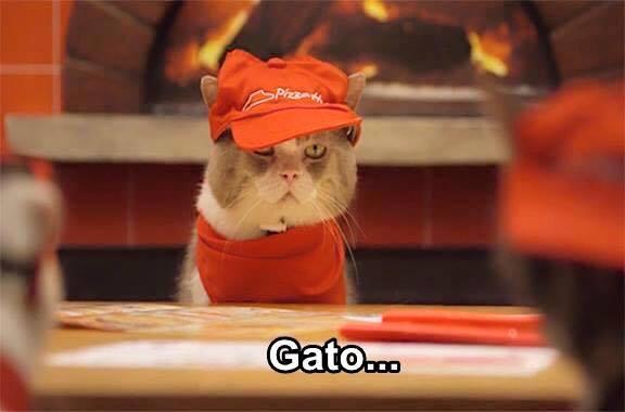 imagenes graciosas de gatos con oficios15 Imágenes Graciosas para Whatsapp (Gatos y Frases)