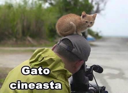 imagenes graciosas de gatos con oficios2 Imágenes Graciosas para Whatsapp (Gatos y Frases)