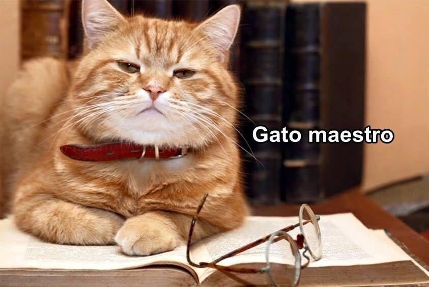 imagenes graciosas de gatos con oficios21 Imágenes Graciosas para Whatsapp (Gatos y Frases)