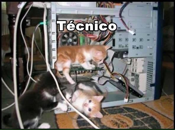 imagenes graciosas de gatos con oficios22 Imágenes Graciosas para Whatsapp (Gatos y Frases)