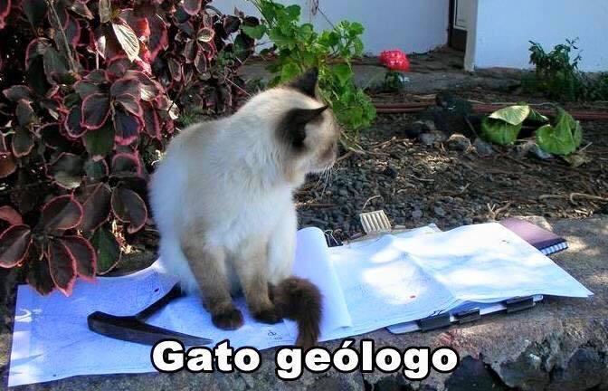 imagenes graciosas de gatos con oficios24 Imágenes Graciosas para Whatsapp (Gatos y Frases)