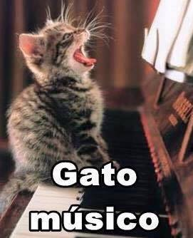 imagenes graciosas de gatos con oficios25 Imágenes Graciosas para Whatsapp (Gatos y Frases)