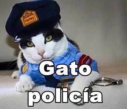 imagenes graciosas de gatos con oficios26 Imágenes Graciosas para Whatsapp (Gatos y Frases)
