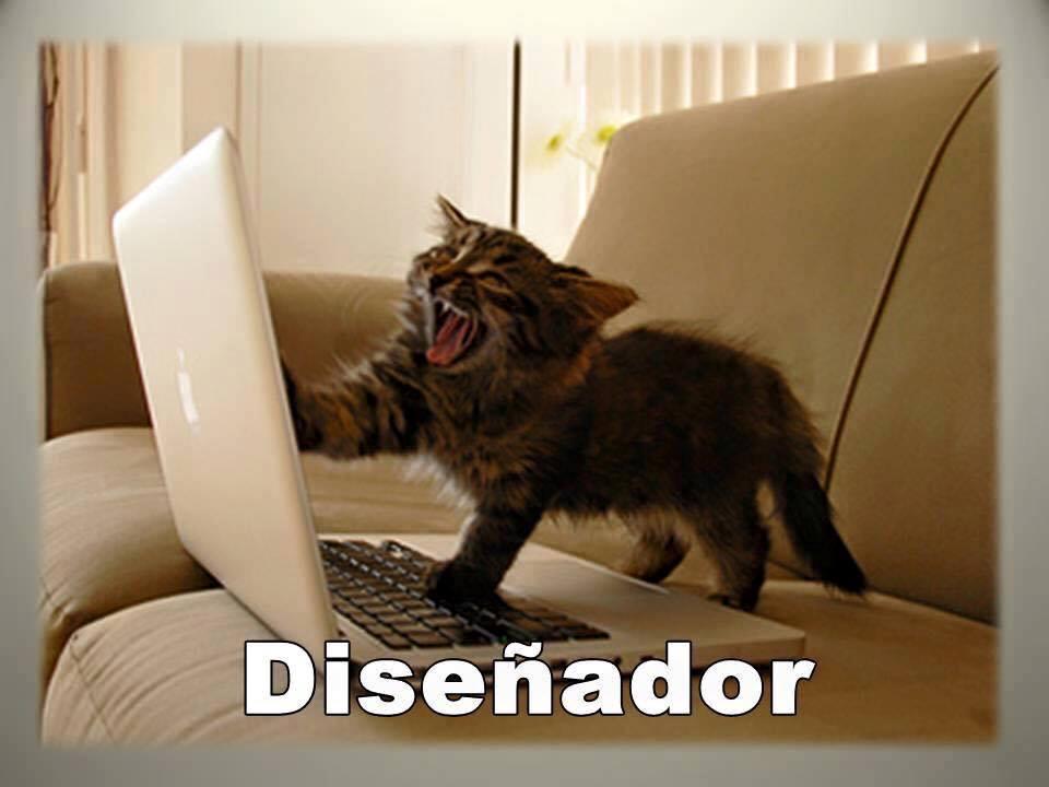 imagenes graciosas de gatos con oficios27 Imágenes Graciosas para Whatsapp (Gatos y Frases)