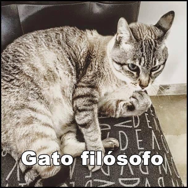 imagenes graciosas de gatos con oficios4 Imágenes Graciosas para Whatsapp (Gatos y Frases)