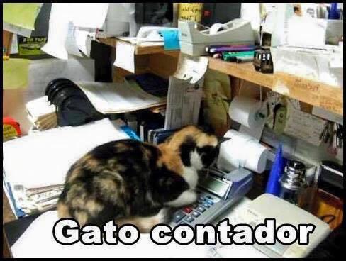 imagenes graciosas de gatos con oficios7 Imágenes Graciosas para Whatsapp (Gatos y Frases)