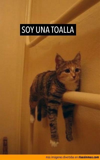 memes de animales chistosos100 100 Memes de Animales Graciosos