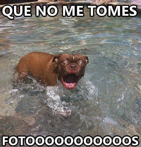 memes de animales chistosos107 100 Memes de Animales Graciosos