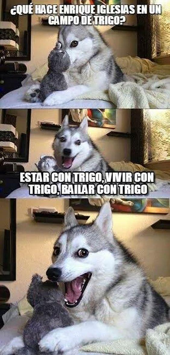 memes de animales chistosos111 100 Memes de Animales Graciosos