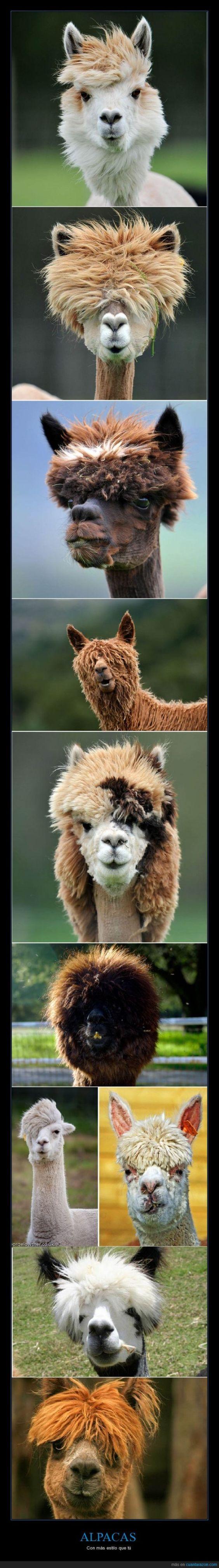 memes de animales chistosos112 100 Memes de Animales Graciosos