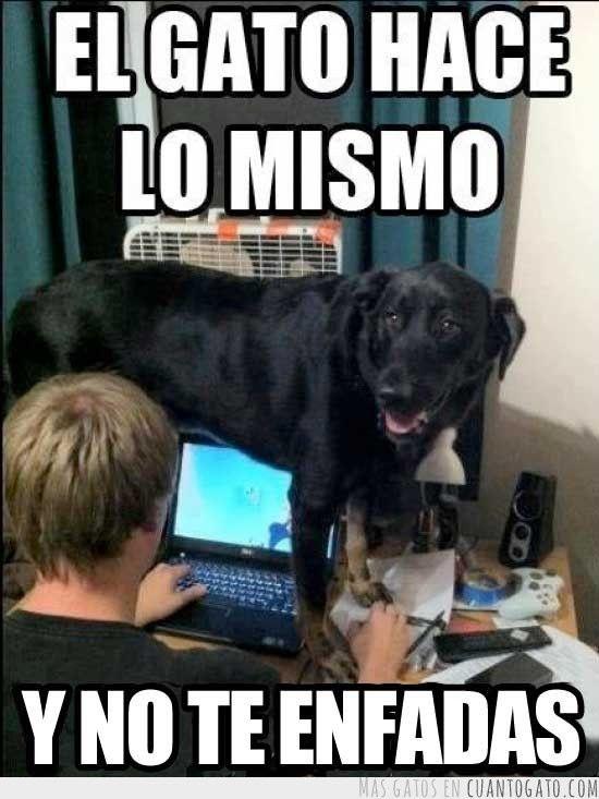 memes de animales chistosos17 100 Memes de Animales Graciosos