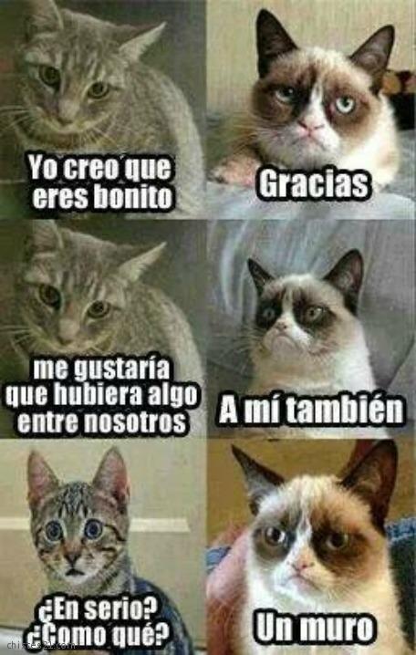 memes de animales chistosos19 100 Memes de Animales Graciosos