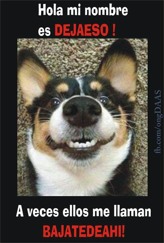 memes de animales chistosos2 100 Memes de Animales Graciosos