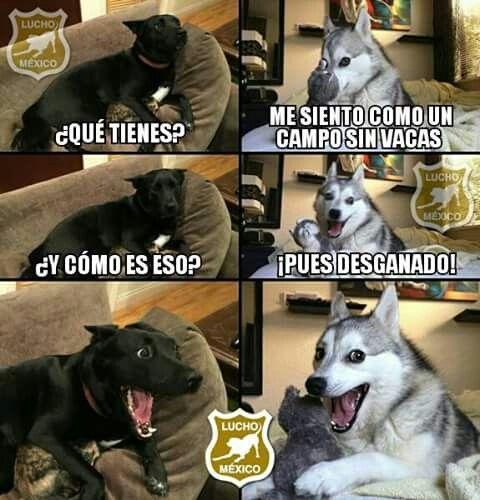 memes de animales chistosos24 100 Memes de Animales Graciosos