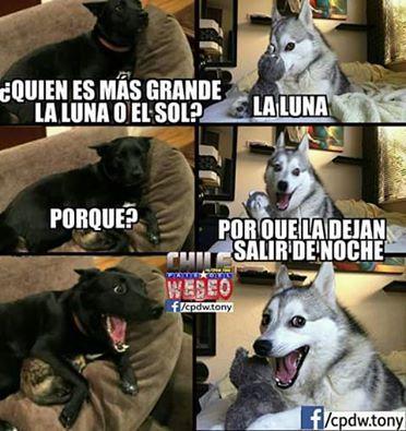 memes de animales chistosos3 100 Memes de Animales Graciosos