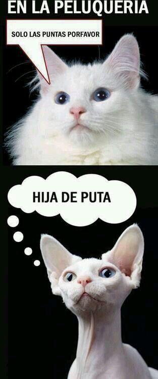 memes de animales chistosos31 100 Memes de Animales Graciosos