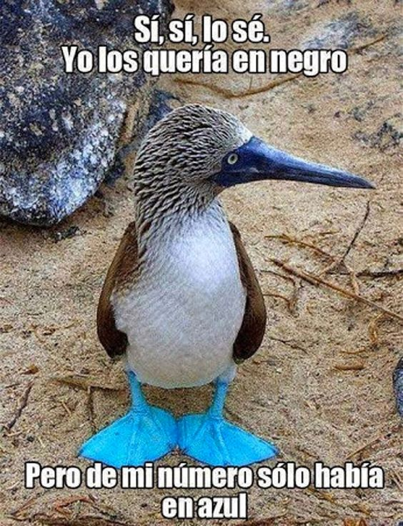 memes de animales chistosos32 100 Memes de Animales Graciosos