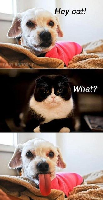 memes de animales chistosos38 100 Memes de Animales Graciosos