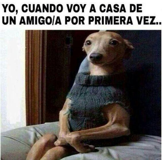 memes de animales chistosos43 100 Memes de Animales Graciosos