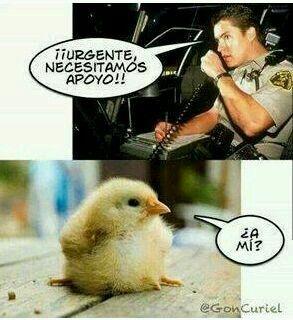 memes de animales chistosos46 100 Memes de Animales Graciosos