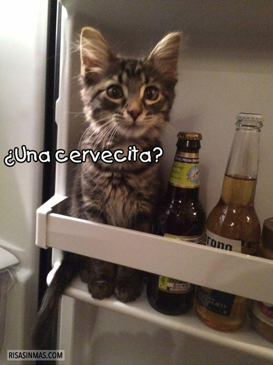memes de animales chistosos58 100 Memes de Animales Graciosos