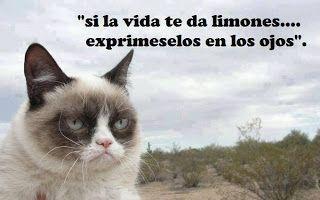 memes de animales chistosos76 100 Memes de Animales Graciosos