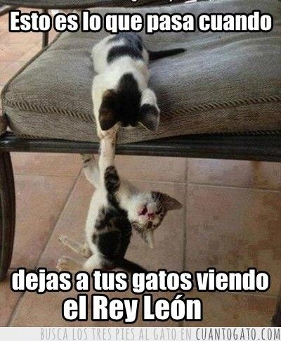 memes de animales chistosos77 100 Memes de Animales Graciosos