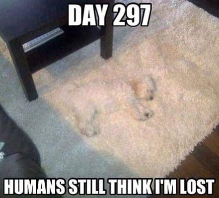memes de animales chistosos79 100 Memes de Animales Graciosos