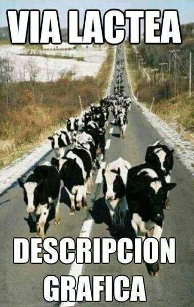 memes de animales chistosos89 100 Memes de Animales Graciosos