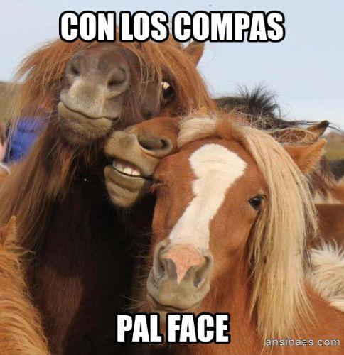 memes de animales chistosos9 100 Memes de Animales Graciosos