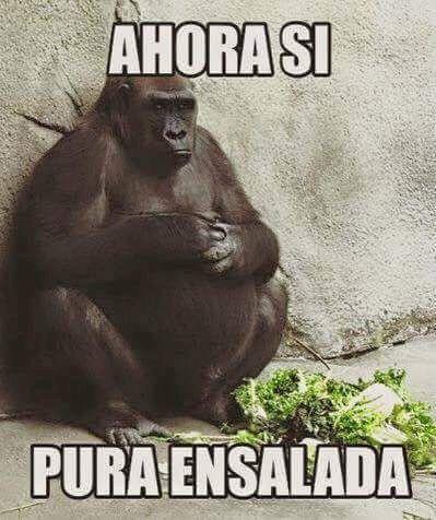 memes de animales chistosos92 100 Memes de Animales Graciosos