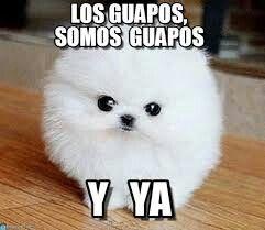 memes de animales chistosos93 100 Memes de Animales Graciosos